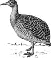 Tinamou (PSF).png