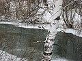 Tomsk, Tomsk Oblast, Russia - panoramio (199).jpg