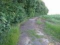 Track beside Beacon Wood - geograph.org.uk - 1413999.jpg