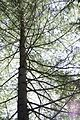 Tree, Greenfield, Franklin County, Massachusetts - panoramio.jpg
