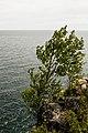 Tree, Silver Bay (18863134216).jpg