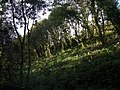 Tree-planting in Allt Clyn - geograph.org.uk - 1549608.jpg