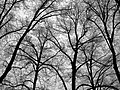 Tree Silhouette (64712373).jpeg