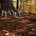Tree worship (6323965089).jpg