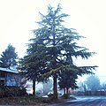 Trees in fog 3.jpg