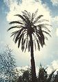 Tripoli - panoramio - sasikan (1).jpg