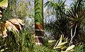 Tronc de palmier bouteille.jpg