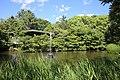 Tsuruma Park Akinoike Pond 20170527-03.jpg