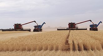 Chaser bin - Two combines unloading into 2 chaser bins