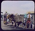 Two water buffaloes laden with skins of water LCCN2004707726.jpg
