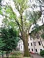Udine - farnia - 202109161105.jpg