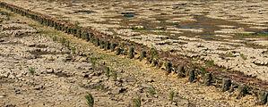 Uniek door eb en vloed steeds wisselend kweldergebied. Locatie, Noarderleech Provincie Friesland 27.jpg