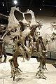 Utahceratops gettyi 2 salt lake city.jpg