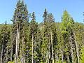 Vällingsjö urskog - entre från öster.JPG