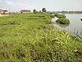 VUE DE LA MANGROVE DU LAC AHEME AU BENIN.jpg