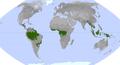 Vegetationszone Tropischer Regenwald.png