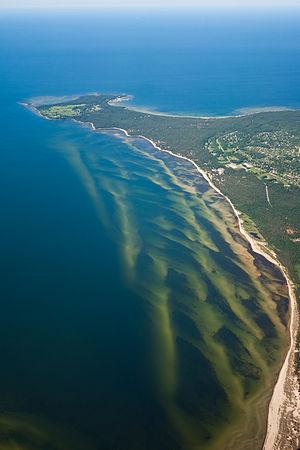 Laulasmaa - Image: Vetikad Eesti rannikul