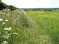 View along a field margin - geograph.org.uk - 1355339.jpg