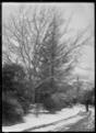 View of the Dunedin Botanic Garden after a snowfall. ATLIB 294715.png