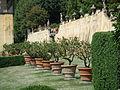 Villa gamberaia, limoni 01.JPG