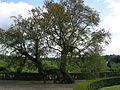 Villa il palagio di riomaggio 13 albero.JPG