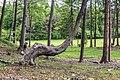 Villach Federaun Federauner Strasse Wald West-Ansicht 10052017 8344.jpg