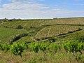 Villeneuve-les-Corbières Vignes en coteaux.jpg