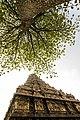 Vimanam Under the tree from gangaikondacholapuram.jpg