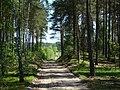 WILCZE ŁUGI wiosna 15 - panoramio.jpg