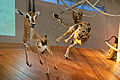 WLANL - thedogg - Jachtscene gazelle met cheeta (1).jpg
