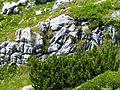 WLE Nebelhorn Höfartsweg 4.jpg