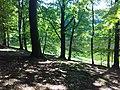 Waldsee im Grumsiner Forst.jpg