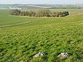 Walker's Plantation - geograph.org.uk - 701854.jpg