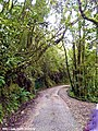 Walking into Mossy Forest, Cameron Highlands.jpg