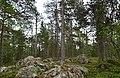 Walking trail, Inari, Finland (6) (36637683076).jpg