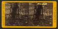 Wandering Willie's Spring, from Robert N. Dennis collection of stereoscopic views 2.png