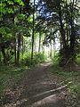 Wanderweg durch den Landsberger Busch - 02.jpg