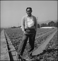 Warm Springs, California. Harry Konda is shown above in strawberry field on March 27, 1942, six wee . . . - NARA - 537589.tif