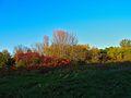 Warner Park - panoramio (59).jpg