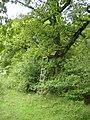 Watch tower, Ravensroost Wood. - geograph.org.uk - 433678.jpg