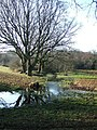 Watery meadow by the Lynher - geograph.org.uk - 637427.jpg