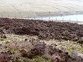 West of Gwryne Fawr reservoir - geograph.org.uk - 705364.jpg
