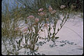 White Sands National Monument WHSA2344.jpg