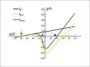 A plot of current (ion flux) against voltage (transmembrane potential) illustrates the action potential threshold (red arrow) of an idealized cell.