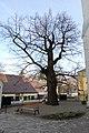 Wiener Naturdenkmal 80 - Sommerlinde (Döbling) a.jpg