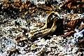 Wild Boar Carcass.jpg