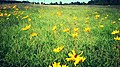 Wild Daisies in November - Flickr - pinemikey.jpg