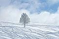Winter (4262780061).jpg
