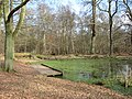 Woodland Pond near the Monument - geograph.org.uk - 1185095.jpg