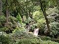 Woodland garden Bodnant.JPG